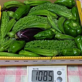 ①岡山県産  新鮮野菜  詰め合わせ  無農薬栽培(野菜)