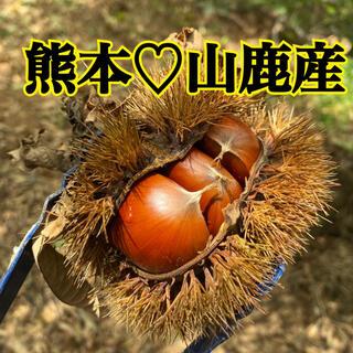 熊本県産 山鹿 和栗 生栗(野菜)
