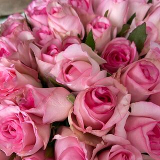 増量‼️バラ (切り花・生花) ベラヴィータ(縁が濃いピンク)20㎝ 70本(その他)