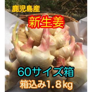 新生姜 箱込み1.8kg  減農薬(野菜)