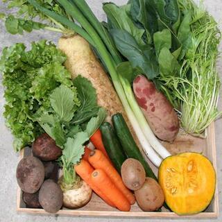 旬の自然栽培 野菜セット☆無肥料無農薬で作ったの季節の野菜を詰め合わせ♪(野菜)