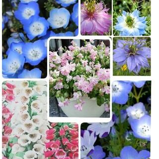 🌺花の種 シレネピーチブロッサム ネモフィラ2種 ジキタリス ニゲラ