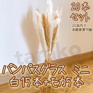 パンパスグラス ミニ ドライフラワー テールリード 白15本 モカ5本(ドライフラワー)