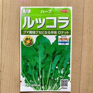 ルッコラ ロケット 種 タネ ハーブ 100粒(野菜)