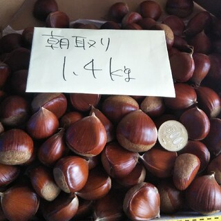 朝取り生栗  無農薬  1.3kg