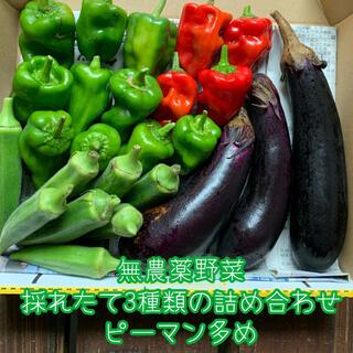 お値下げ✨無農薬野菜*3種類の詰め合わせ*ピーマン多め*野菜セット*コンパクト*