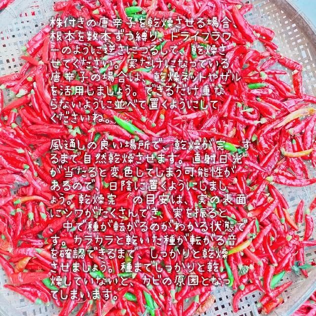無農薬 唐辛子 80g 食品/飲料/酒の食品(野菜)の商品写真