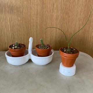 ミニ素焼き鉢 3個組(ヘデラカット苗付き) 多肉植物葉挿し 種まき