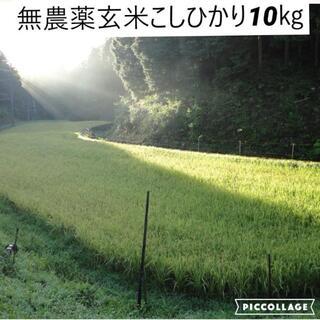 令和3年度産 新米【湧き水栽培】  無農薬玄米こしひかり 10㎏ 奈良の農家直送