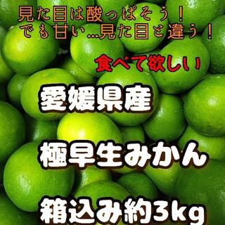 愛媛県産 極早生みかん 箱込み約3kg 柑橘 ミカン
