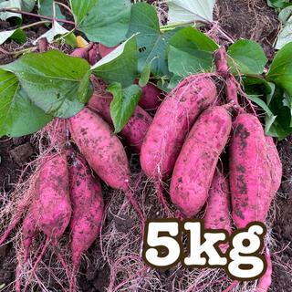 【SALE】甘いさつまいも サツマイモ  【霧島 紅はるか】 5キロ [送料込]