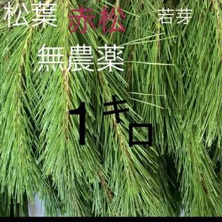 松葉 赤松 無農薬 若芽