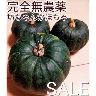 ✨完全無農薬✨ ほくほく  あまーい  丹波産 坊ちゃんかぼちゃ 詰め合わせ(野菜)