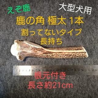鹿の角プレカット品 極太 1本 根元付き 大型犬用 0918-01