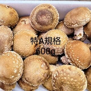 ☆椎茸農家☆【特A規格】600g(野菜)