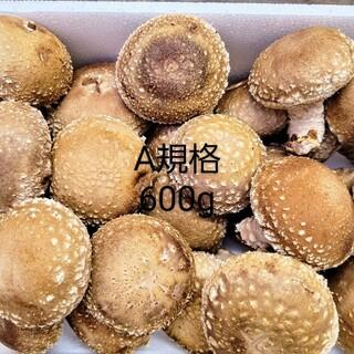 ☆椎茸農家☆【規格A】600g(野菜)