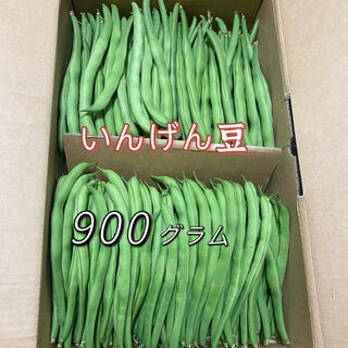 いんげん豆 900g(野菜)