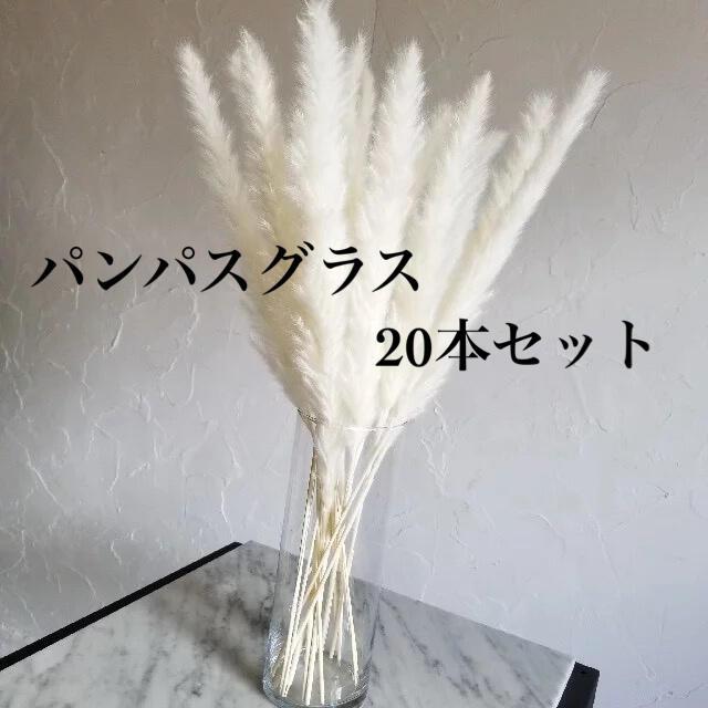 パンパスグラス 20本 インテリア ドライフラワー ハンドメイドのフラワー/ガーデン(ドライフラワー)の商品写真