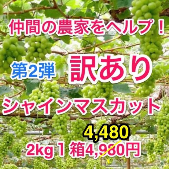 ◆そろそろ最終!仲間の葡萄農家ヘルプ(山梨産)訳ありシャインマスカット2キロ箱 食品/飲料/酒の食品(フルーツ)の商品写真