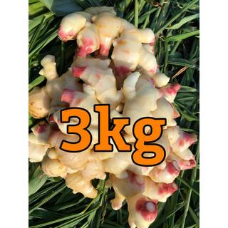 減農薬栽培 九州産新生姜3kg以上(野菜)