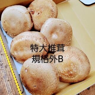 ☆椎茸農家☆【規格外B】食べきりsize❗(野菜)