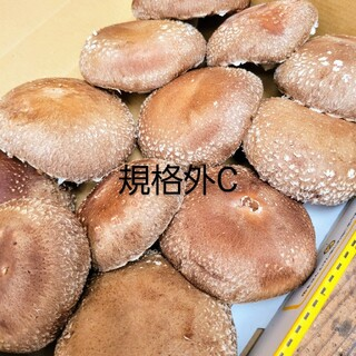 ☆椎茸農家☆【規格外C】食べきりsize❗(野菜)