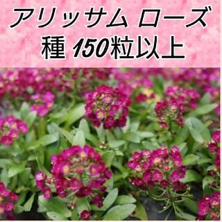 アリッサム ディープローズ種150粒以上(その他)