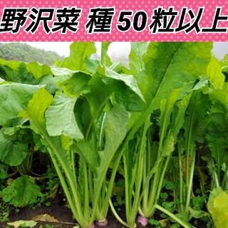 野沢菜種50粒以上(野菜)