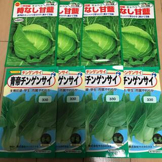 ガーデニング キャベツ チンゲンサイ(野菜)