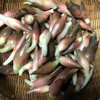 秋ミョウガ 800g(野菜)