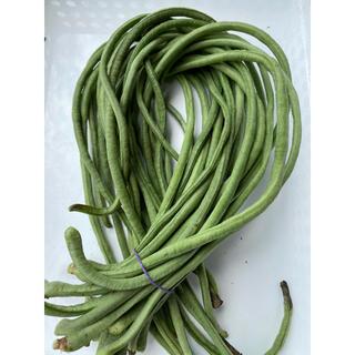 秋新物十六ささげ緑500g(野菜)