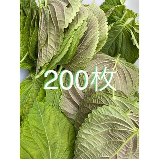 無農薬えごまの葉200枚(野菜)