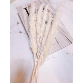 花材 パンパスグラス 5本(ドライフラワー)