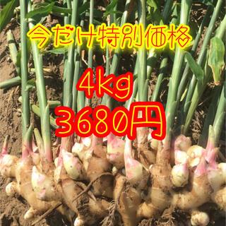 新生姜 箱込み4kg  (野菜)