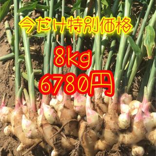 新生姜 箱込み8kg  減農薬栽培(野菜)