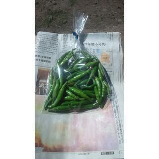 【岩手盛岡産】青唐辛子 200g 辛いです。 (青とうがらし) 農薬不使用(野菜)
