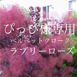 ぴっぴ様専用 ベルベットクローク ラブリーローズ (その他)