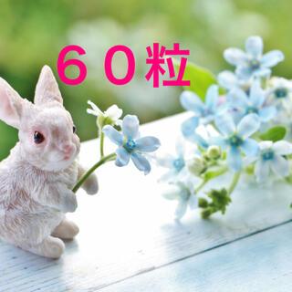 ブルースター 種 60粒(プランター)