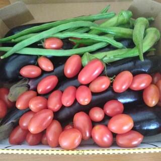 無農薬 夏野菜セットです。無農薬なす、オクラ、いんげん豆、ミニトマト