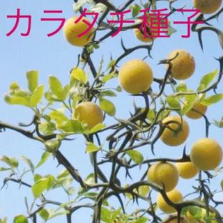 カラタチ 種子 30個(その他)
