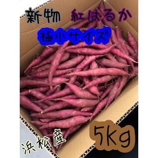 SSサイズ 極小 紅はるか 5キロ サツマイモ さつまいも 5kg
