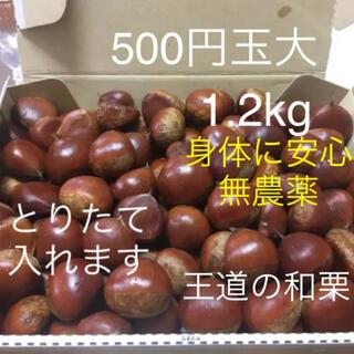 とれたて無農薬栽培の生栗銀寄1.2kg (フルーツ)