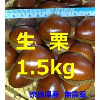 生栗1.5kg以上 奈良県産 無農薬