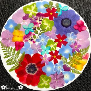 ✿押し花素材✿直径約6cmアネモネ2輪入り鮮やか彩りアソート【40枚】