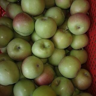 摘果りんご加工用20キロ(フルーツ)