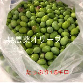 無農薬オリーブ!たっぷり1.5キロ!(フルーツ)