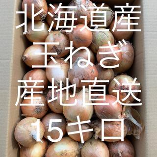 北海道産玉ねぎ 15キロ(野菜)