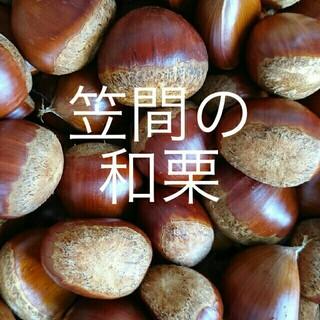 1.3Kg 採れたて☆笠間の和栗☆生栗(野菜)