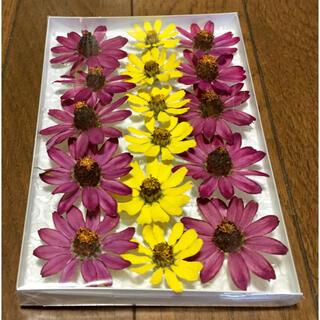 ジニア祭りで100円お値引き‼️M③銀の紫陽花が秋冬におすすめしたい大人色ジニア(ドライフラワー)