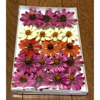 ジニア祭りで100円お値引き‼️M④銀の紫陽花が秋冬におすすめしたい大人色ジニア(ドライフラワー)